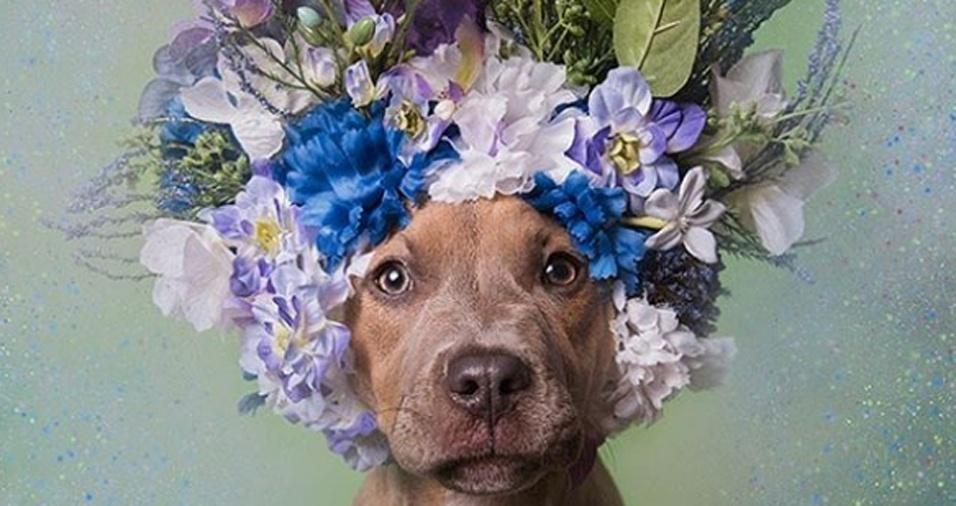 6. Kyla é uma das fêmeas fotografadas por Sophie Gamand, que, inclusive viaja para registrar cães de diferentes abrigos pelos EUA