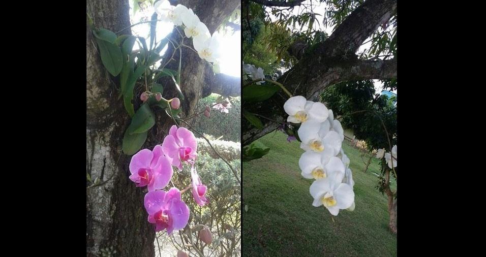 Marli Fonseca Garcia, de Limeira (SP), enviou fotos de suas flores