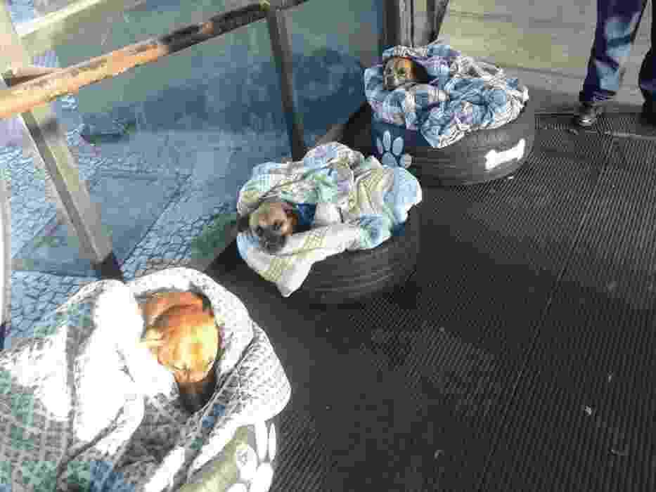 """11.mai.2017 - Três cachorrinhos que vivem em um terminal de ônibus no bairro Barreirinha, em Curitiba, ganharam cobertores para se protegerem do frio. Max, Pitoco e Zoinho contaram com a ajuda da ONG Cão da Barreirinha, que teve a ideia de """"transformar"""" pneus em confortáveis caminhas para os bichinhos. Um post no Facebook, publicado pela internauta Fabiane Rosa, divulgou a criativa ação. """"Não canso de elogiar a Neusa dos Santos e outros voluntários que proporcionam a esses anjos uma cama quentinha no frio, alimento todos os dias, água fresca, segurança, um cafuné. Parabéns aos funcionários desse termina. Tantas empresas em Curitiba poderiam seguir este exemplo, adotar um mascote"""", diz o texto publicado - Reprodução/Facebook/Fabiane Rosa"""