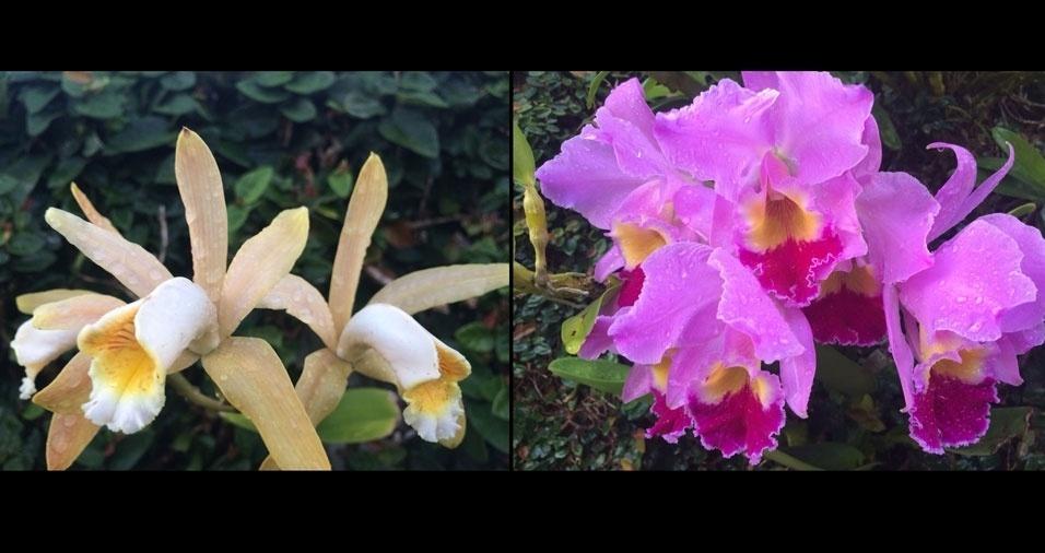 A coleção de orquídeas do Paulo Camporesi, de São Paulo (SP), é bastante colorida