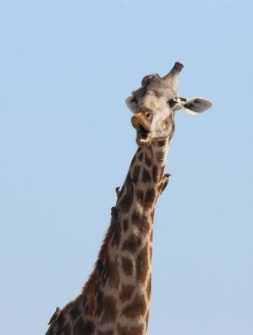 29.set.2016 - Fotos engraçadas de animais disputam, uma vez por ano, o Comedy Wildlife Photography Awards. O prêmio é uma sátira de concursos promovidos por instituições com National Geographic e London?s Natural History Museum