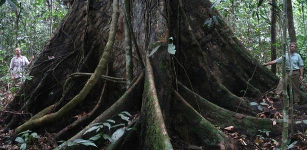 Reprodução/nativetreesociety