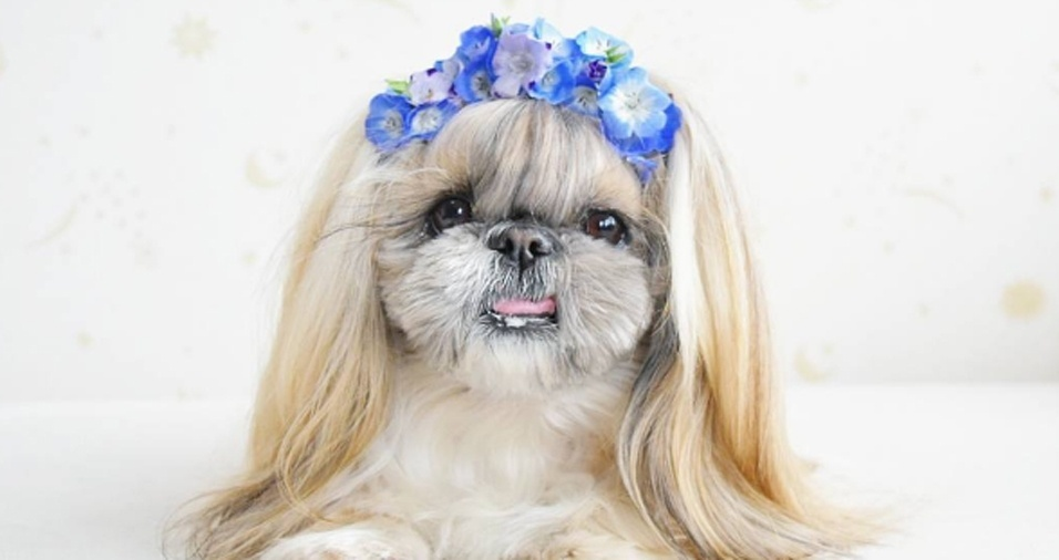 """5. Como se não bastasse o """"cabelo"""" lindo, os donos de Kuma não se cansam de manter os fios brilhosos e escovados e com todos os apetrechos a que tem direito"""