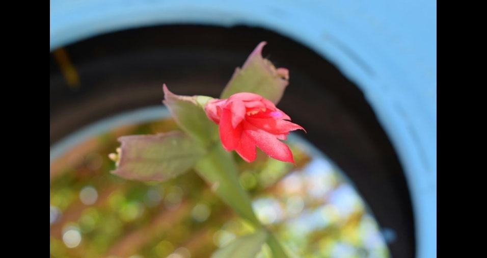 Flávia Nayara e a flor de maio