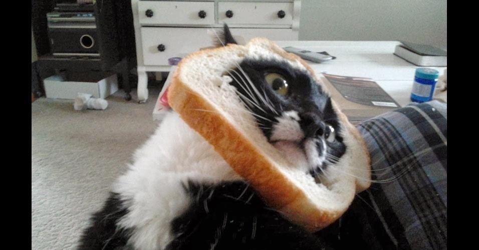 22. Ei, é o mesmo pão do pombo?