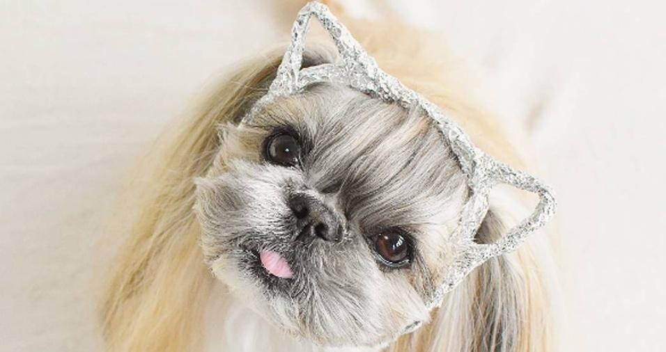 11. Como se não bastasse Kuma ser uma cachorra linda, ela ainda arrisca fazer o papel de gatinha também