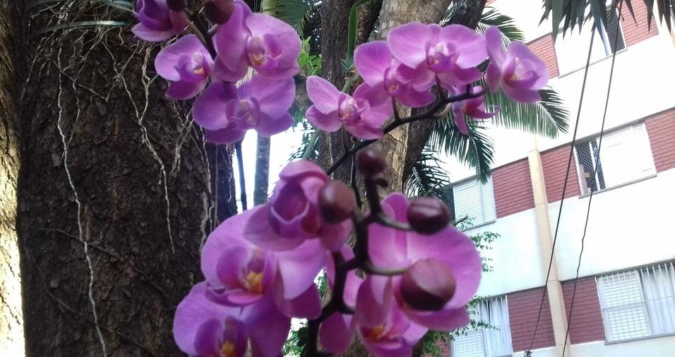 Maria de Fátima Santana enviou fotos das lindas orquídeas que ela e os vizinhos plantaram no condomínio onde moram, em São Paulo (SP)