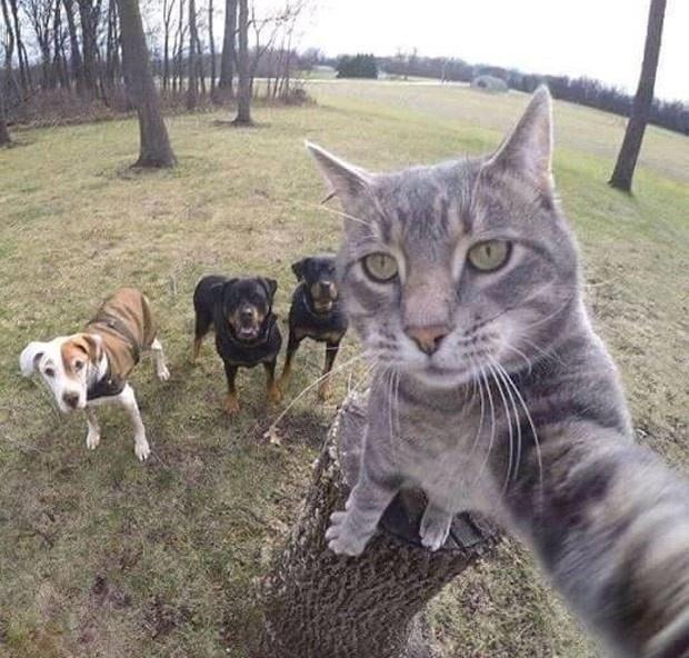 """2.jan.2016 - """"Diga xis, galera"""". Com esse comentário, o perfil 9gag postou no Instagram uma foto na qual um gato parece fazer uma selfie junto com outros três cães. A publicação alcançou mais de 1 milhão de curtidas."""