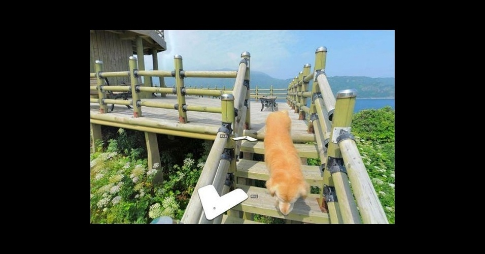 """17.jun.2017 - Que fofo! Cachorro acompanha fotógrafo do Google Street View no mapeamento da ilha sul-coreana Ulleung-gun e aparece como """"Photobomb"""" nas fotos locais"""