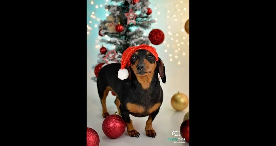 Aliás, o cãozinho Léo ganhou até foto em estúdio em clima de Natal