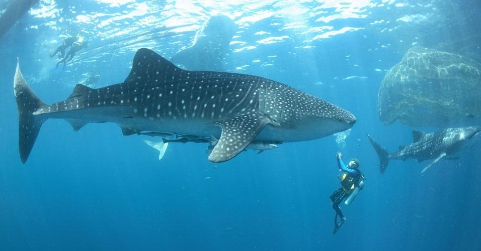 10. Quando mergulhar no oceano, não capture nenhuma forma de vida marinha