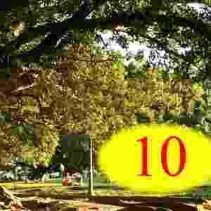 3. RESPOSTA: 10. São as mesmas dez árvores vistas de diferentes perspectivas. Na ida, as árvores estavam à direita da mulher, mas na volta, quando ela estava no sentido contrário da rua, as plantas podiam ser vistas à esquerda - Brenda Vega/UOL