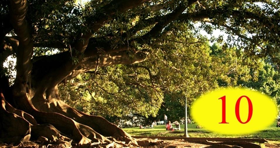 3. RESPOSTA: 10. São as mesmas dez árvores vistas de diferentes perspectivas. Na ida, as árvores estavam à direita da mulher, mas na volta, quando ela estava no sentido contrário da rua, as plantas podiam ser vistas à esquerda