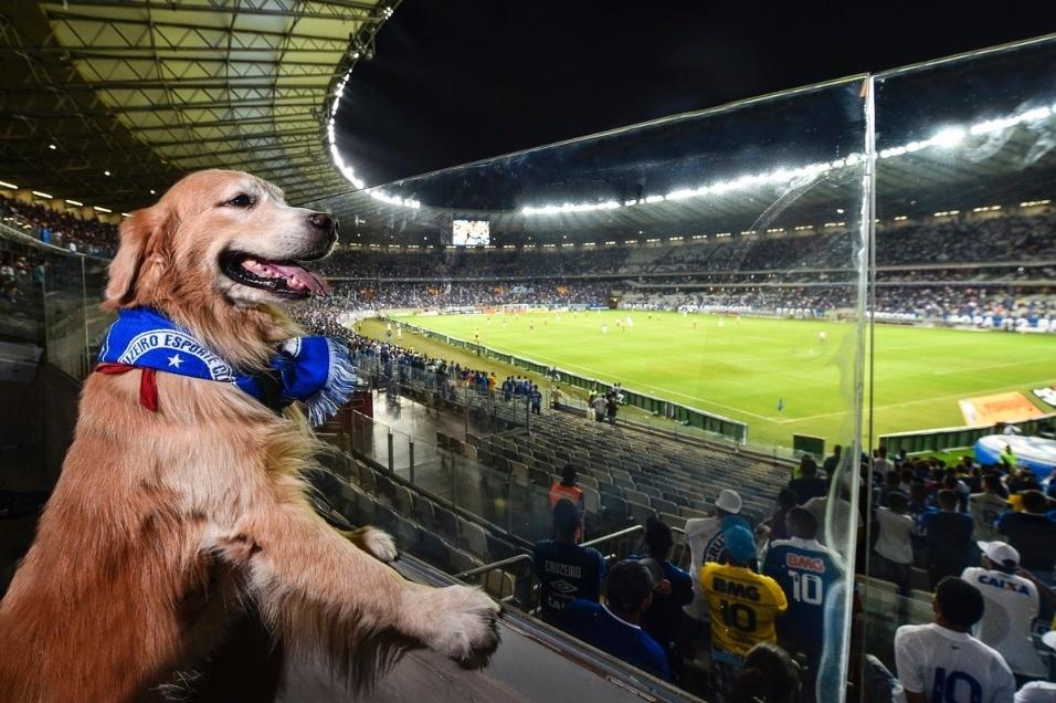19.abr.2017 - A partida entre Cruzeiro e São Paulo no Mineirão, válida pela Copa do Brasil, teve novidade nas arquibancadas. O estádio inaugurou o primeiro espaço exclusivo para torcedores acompanharem a partida com seus cães