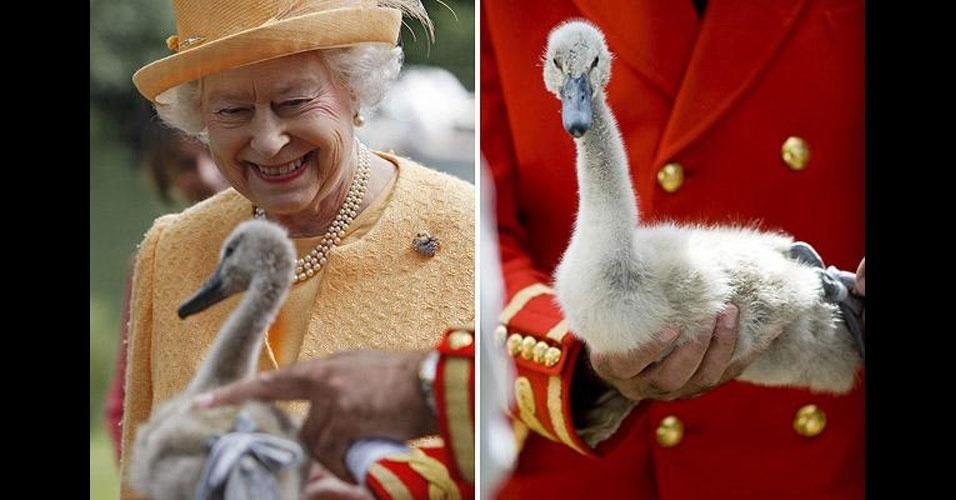 3. Em 2005, a rainha Elizabeth 2ª reivindicou a posse de 88 cisnes bebês no rio Tâmisa