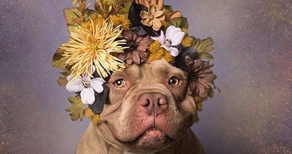 11. Este amigão aqui teve seu final feliz. Após a foto com as flores, ele foi adotado e encontrou uma família para chamar de sua. Sophie Gamand aproveitou para fazer um post de agradecimento e mais um incentivo para que as pessoas adotem um amigo