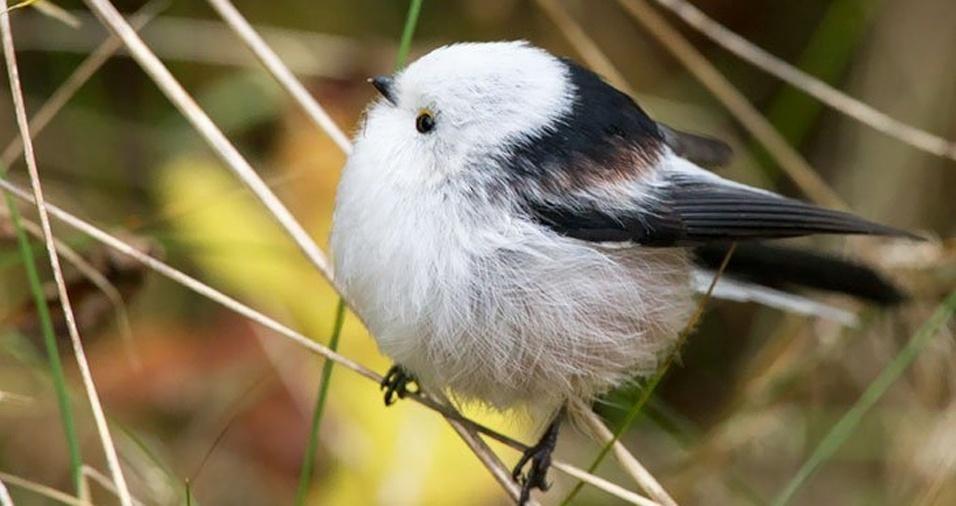 28. Quem diria que os passarinhos também podem ser bolinhas de penas!