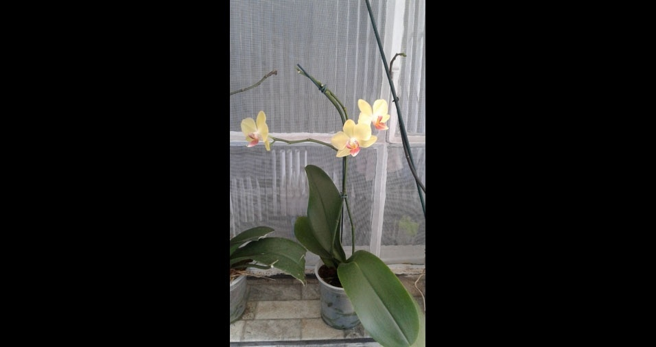 Orquídeas do Bruno Pereira