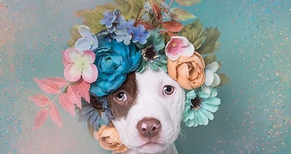 16. Na imagem, a pequena Dakota posa com sua bela tiara florida