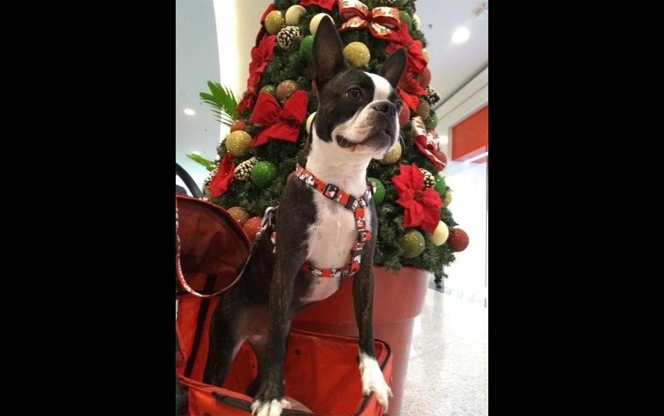 Jociely Martins, de Jundiaí (SP), mostra que sua cachorrinha Frida está pronta para a chegada do Natal