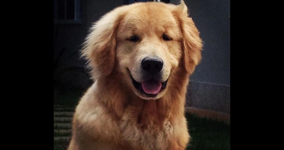 18. O jornalista e apresentador de telejornal William Bonner é apaixonado por seu cachorro Gulliver