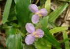 Reprodução/Flora Bonaerense