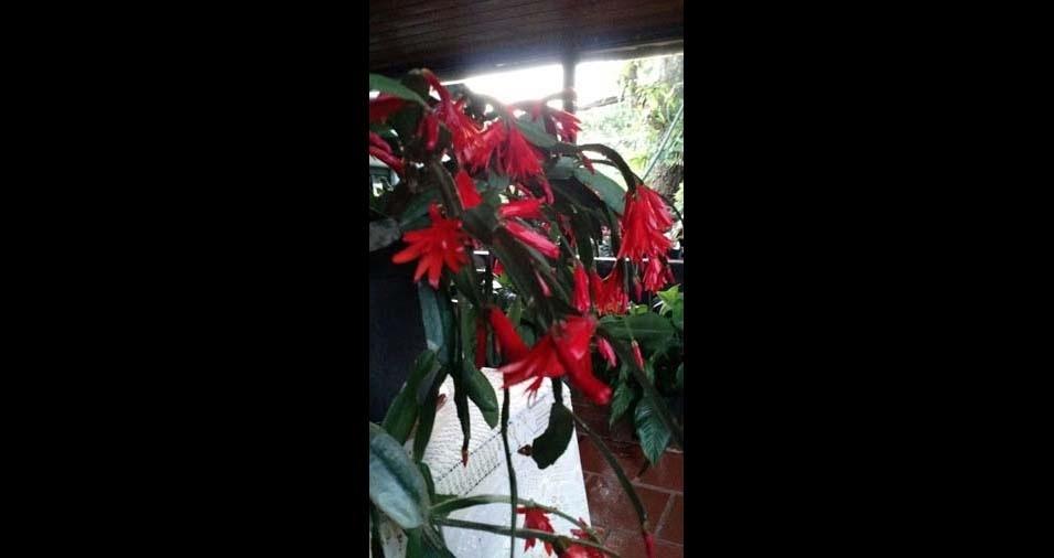 "Egon Erich Taflick, Santo Cristo (RS): ""flor-de-outubro do jardim da vó Ana"""