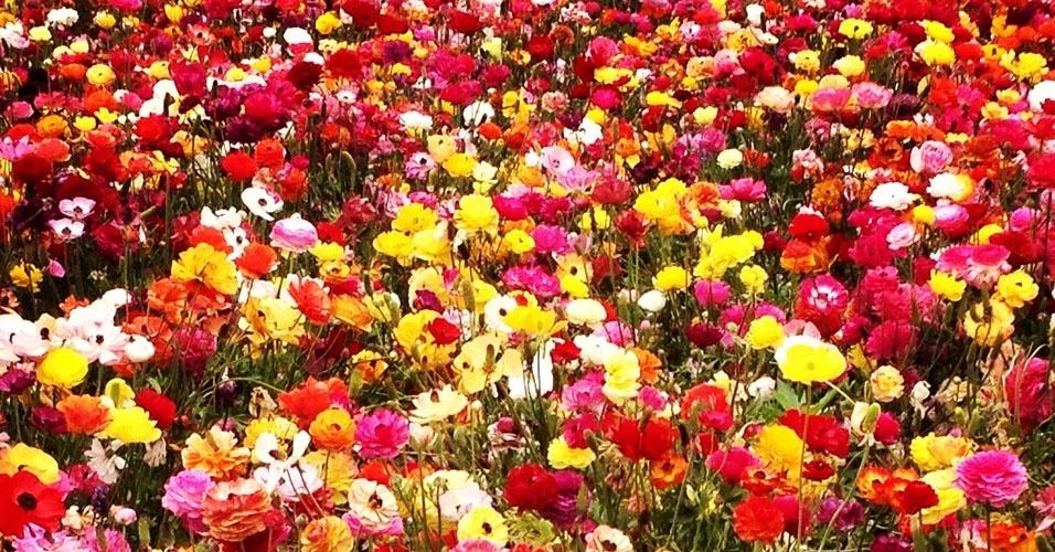 18. Flores: Holambra (SP) - Lei federal