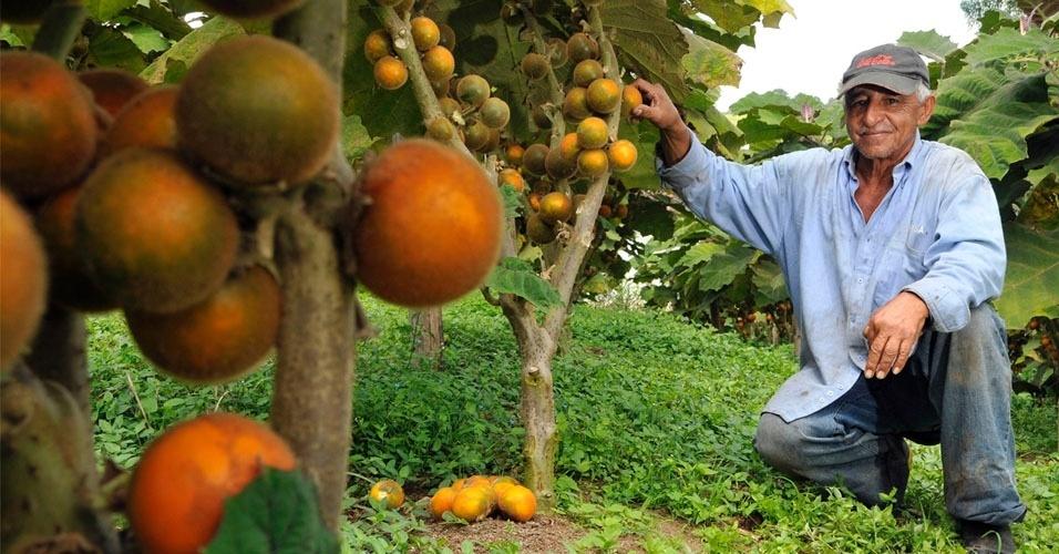 25. Fazendeiros indianos usam Coca-Cola e Pepsi como pesticidas econômicos