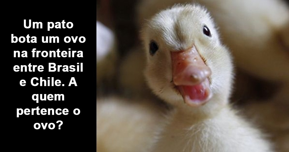 12. Um pato bota um ovo na fronteira entre Brasil e Chile. A quem pertence o ovo?