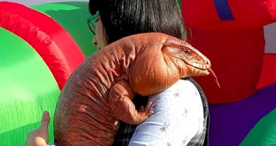 30. Muitas pessoas têm se inspirado em MacGyver e contam sobre as rotinas de seus bichinhos também nos comentários da página do lagarto