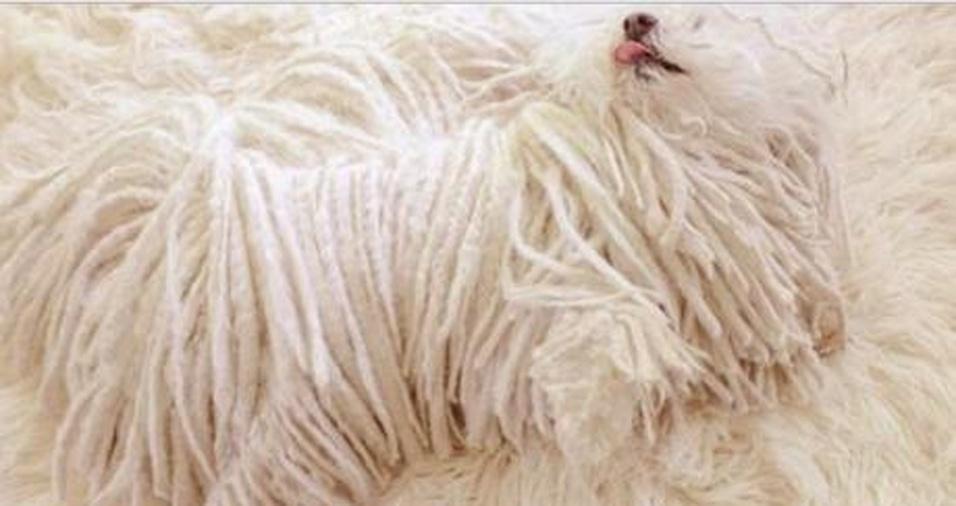 16. Não vá confundir seu cachorro com o tapete!