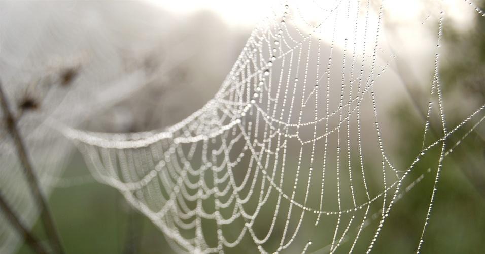 16. A teia de aranha é cinco vezes mais forte que o aço, proporcionalmente ao seu peso