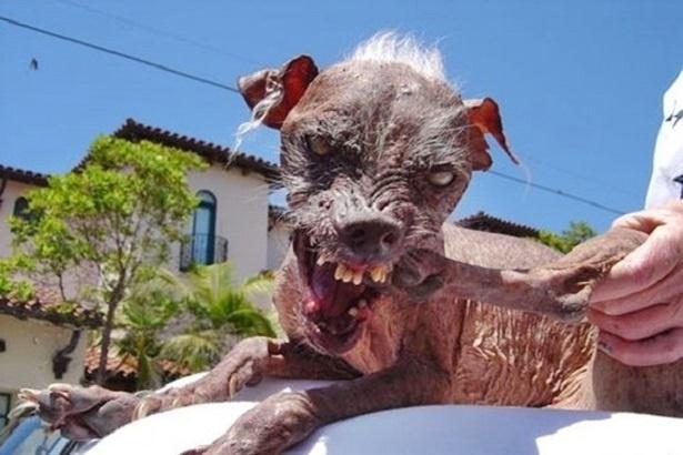Tadinhos Estes 13 Cães Já Foram Eleitos Os Mais Feios Do