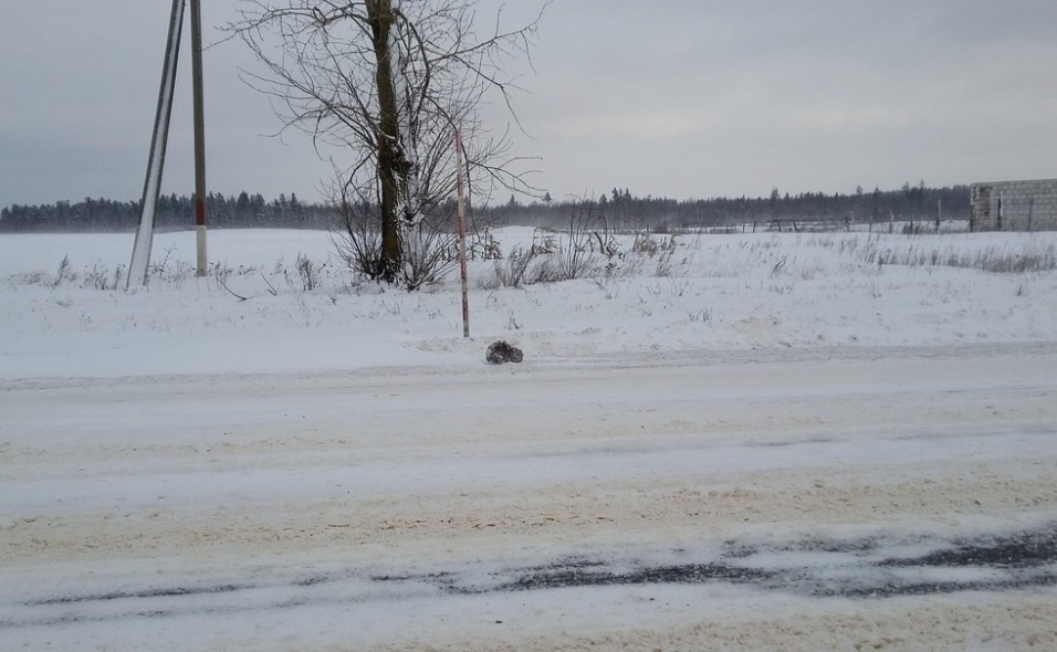7.ago.2017 - Em pleno inverno russo, em janeiro deste ano, Slava dirigia pela estrada congelada quando percebeu algo parecido com um animal à beira da estrada congelada. Ao se aproximar, o jovem russo percebeu que se tratava de um gato. Por sorte, Slava conseguiu resgatar o bicho, que sobreviveu ao congelamento, mas teve o rabo amputado