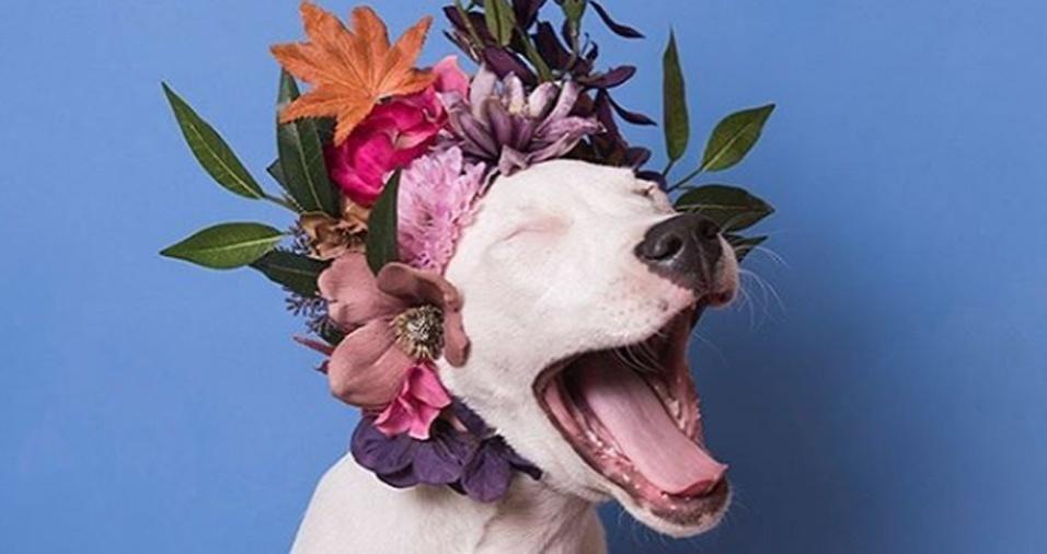 20. As imagens mostram uma nova percepção sobre os pit bulls. Muitos seguidores de Sophie falam sobre como passaram a enxergar os cães de outra forma, graças ao novo olhar captado pelas lentes da fotógrafa