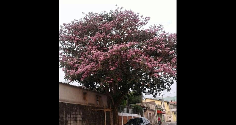 Eliane Pinheiro, de Araçariguama (SP)