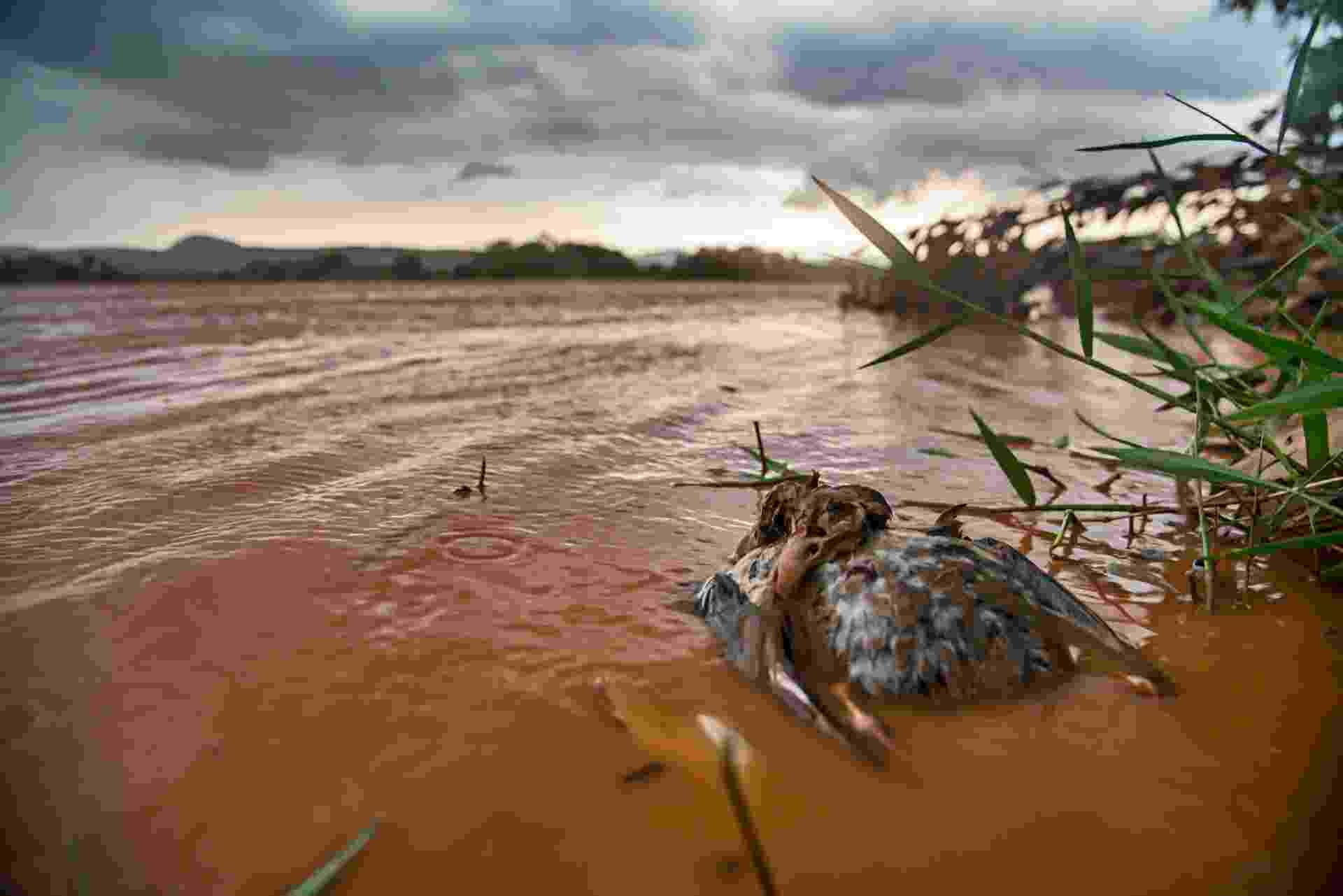 26.nov.2015 - Um dos trechos mais preservados do rio Doce foi tomado pela lama de duas barragens da Samarco (Vale e BHP Billiton). Cerca de 25 mil piscinas olímpicas de rejeitos de mineração se deslocaram - e ainda percorrem - mais de 600 km até a costa capixaba. Na imagem, morador da região chora a tragédia - Instituto Últimos Refúgios
