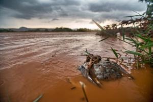 Um dos trechos mais preservados do rio Doce foi tomado pela lama de duas barragens da Samarco