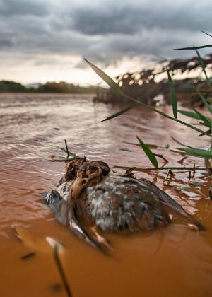 Um dos trechos mais preservados do rio Doce foi tomado pela lama da barragem - Instituto Últimos Refúgios