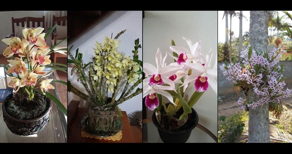Marisa Freitas, de Viçosa (MG), enviou fotos de suas lindas orquídeas