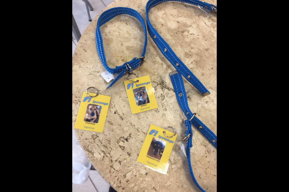 27.mar.2017 - Os três cães receberam coleiras e crachás com nome e foto