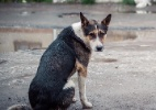 Reprodução/Wellness Pet Food