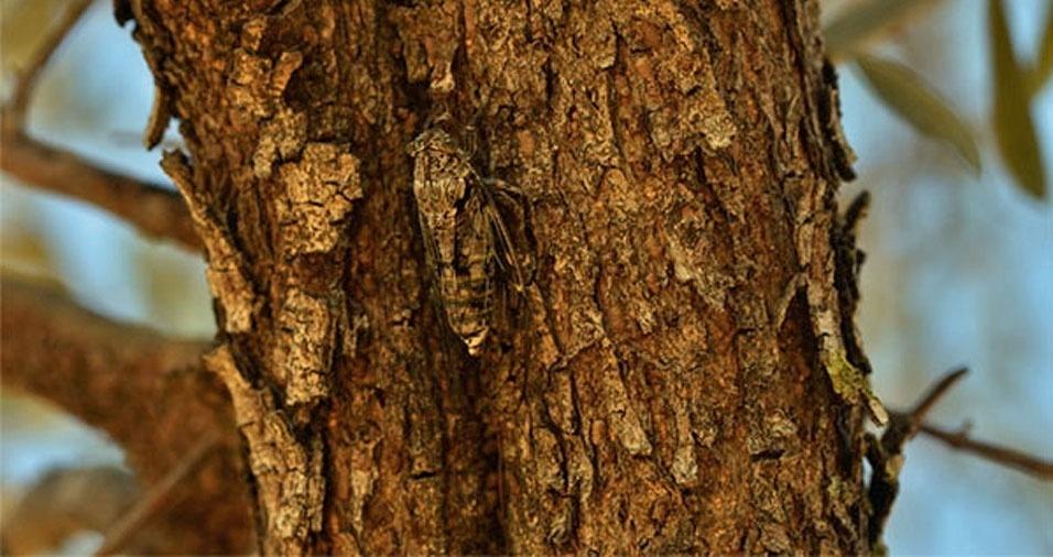 14. Inseto camuflado na casca de uma árvore