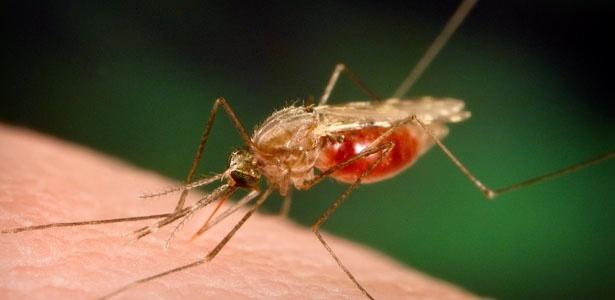 Até julho deste ano, 88.757 brasileiros foram infectados pelo mosquito transmissor da doença