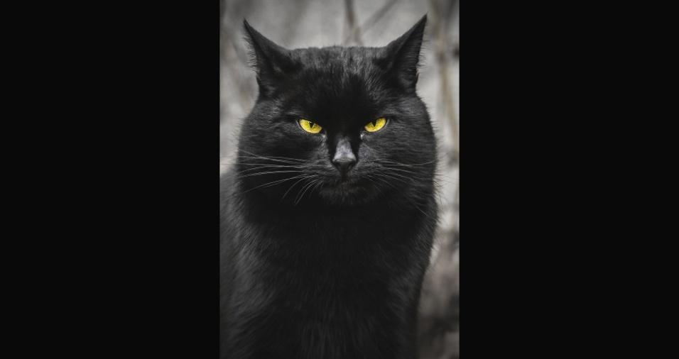 17.jul.2017 - Um fotógrafo autodidata de apenas 19 anos tomou uma atitude exemplar e resolveu mostrar que os gatinhos de rua, às vezes sem banho e cuidados, podem ter seu charme e merecem ser adotados