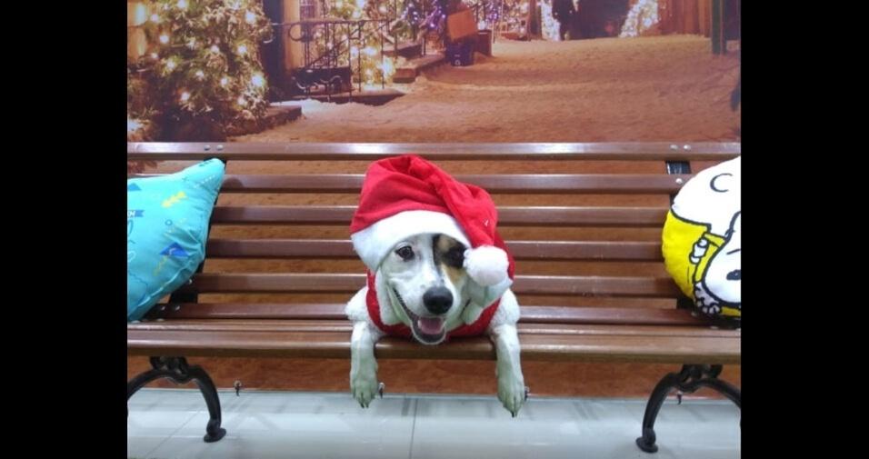 Nadia de Fátima enviou foto da cachorrinha Lola, de Sorocaba (SP)