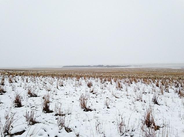 """10.nov.2015 - Uma foto com cerca de 500 ovelhas """"escondidas"""" em uma paisagem no Canadá viralizou na web após o site Buzzfeed local republicar a imagem. No registro, feito em uma fazenda de Saskatchewan, a proprietária Liezel Kennedy disse que teve dificuldades para encontrar sua ovelhas na neve. """"Mal consegui achar minhas ovelhas hoje de manhã"""", comentou a fazendeira no Twitter. E aí, conseguiu achar as ovelhinhas de Liezel?"""