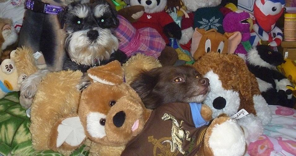 3. Não teve jeito, os olhos entregaram os dois cachorros reais no meio das pelúcias