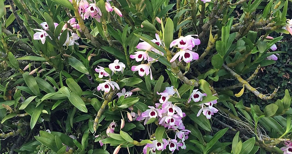 O jardim de Paulo Camporesi, de São Paulo (SP), é bastante florido